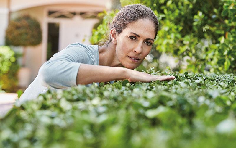 Mit frischen Trieben ins Frühjahr starten: Eine gepflegte und sattgrüne Hecke ist der Stolz aller Gartenbesitzer.