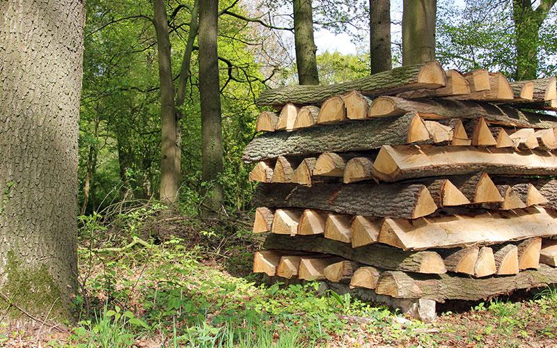 """Wer sein Brennholz direkt aus dem Wald beziehen möchte, benötigt dazu die Erlaubnis des Waldbesitzers beziehungsweise des Försters. Das Holz gibt es häufig """"im Stamm liegend ab Waldweg"""" zu kaufen."""