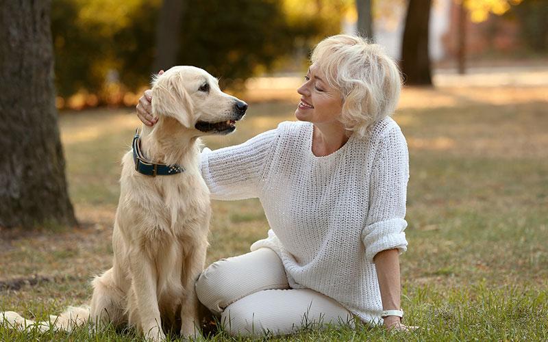 Hunde im Alter